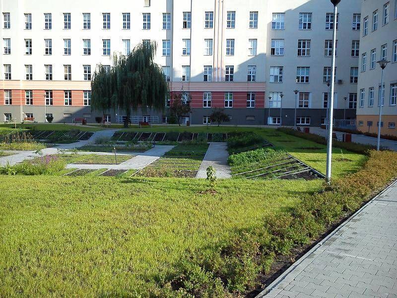 Ogród w mieście 2